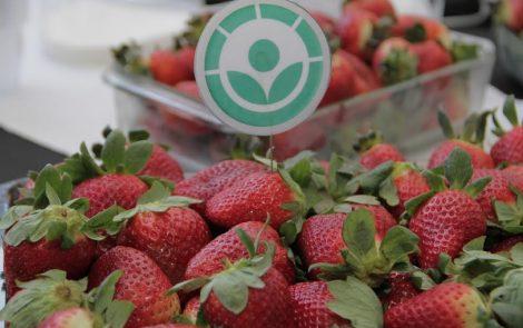 Alimentos Irradiados: Nueva actualización del Código Alimentario Argentino